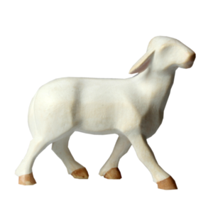 1411-Sheep-Standing.png
