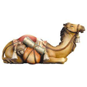 Laying Camel